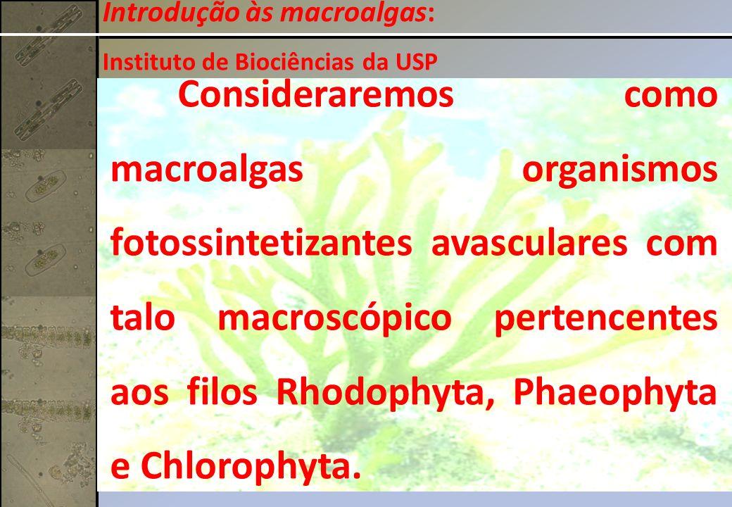 Introdução às macroalgas: