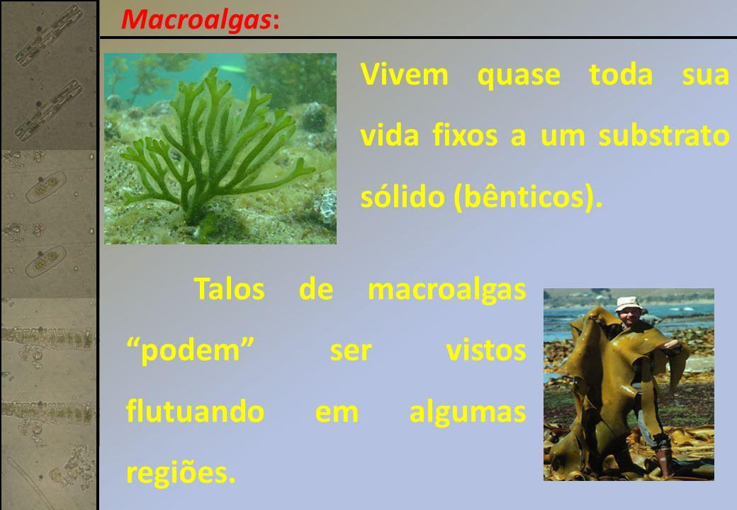 Vivem quase toda sua vida fixos a um substrato sólido (bênticos).