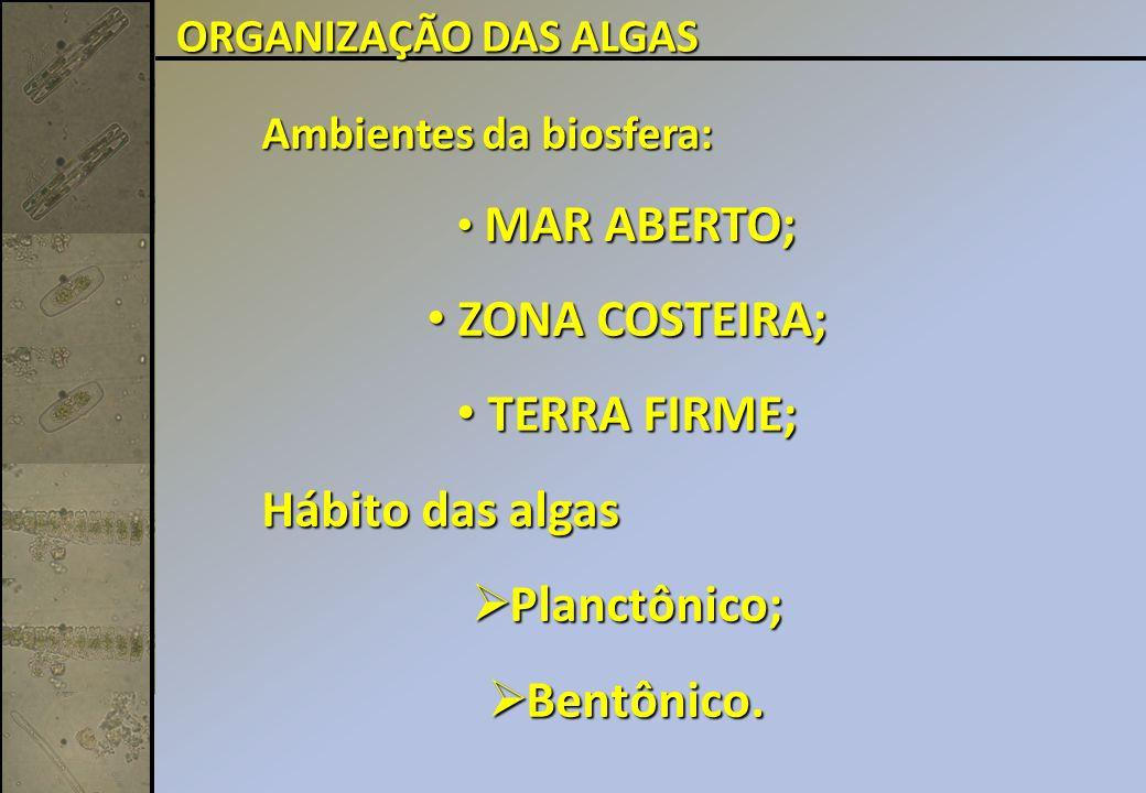 ZONA COSTEIRA; TERRA FIRME; Planctônico; Bentônico.