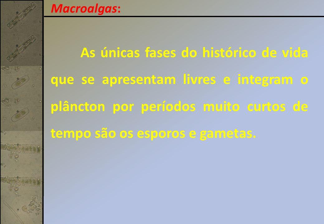 Macroalgas: