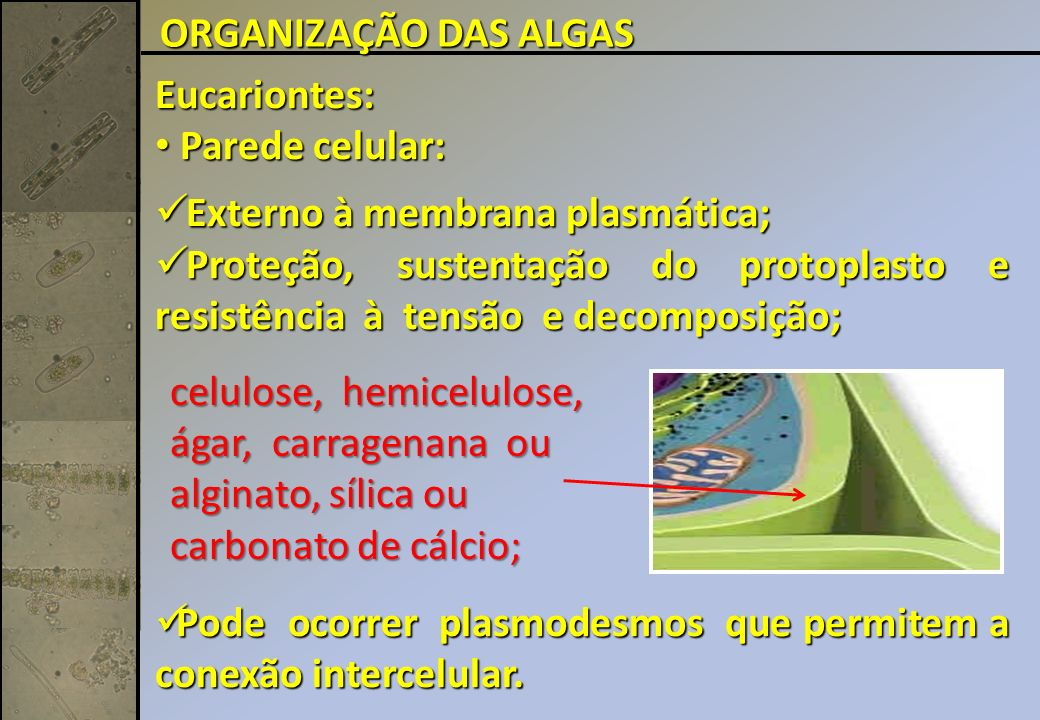ORGANIZAÇÃO DAS ALGAS Eucariontes: Parede celular: Externo à membrana plasmática;