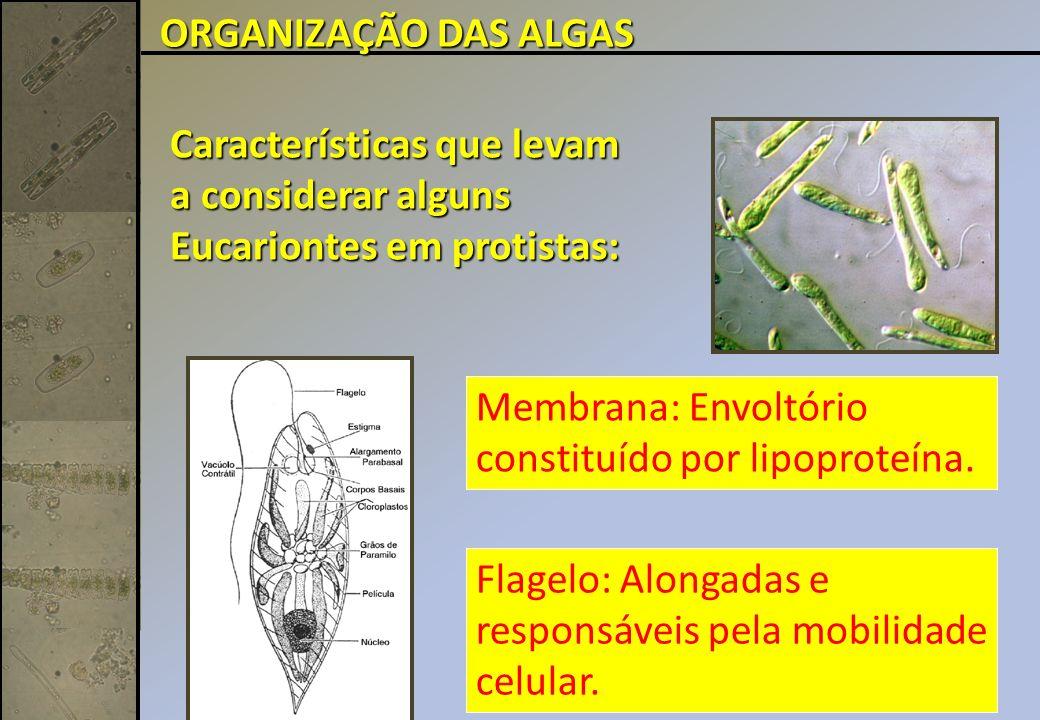 ORGANIZAÇÃO DAS ALGAS Características que levam a considerar alguns Eucariontes em protistas: Membrana: Envoltório constituído por lipoproteína.
