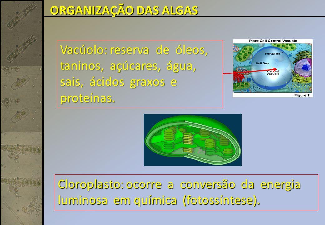ORGANIZAÇÃO DAS ALGAS Vacúolo: reserva de óleos, taninos, açúcares, água, sais, ácidos graxos e proteínas.