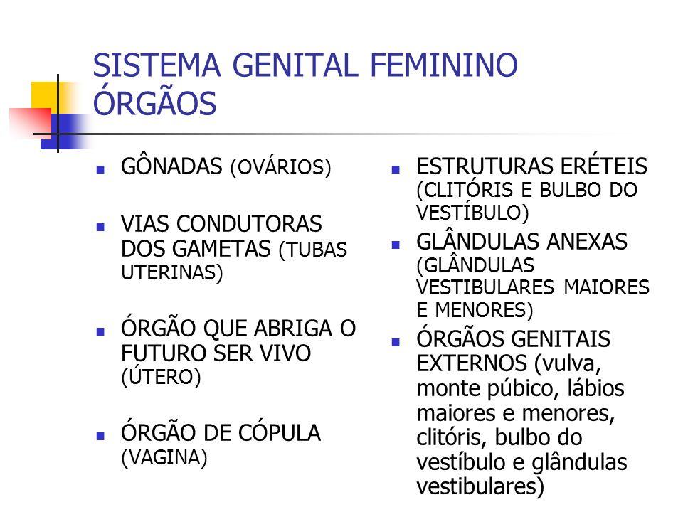SISTEMA GENITAL FEMININO ÓRGÃOS