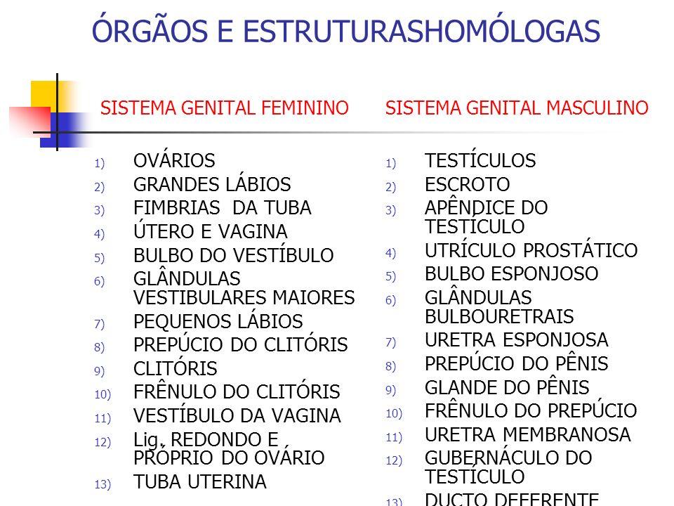 ÓRGÃOS E ESTRUTURASHOMÓLOGAS SISTEMA GENITAL FEMININO SISTEMA GENITAL MASCULINO