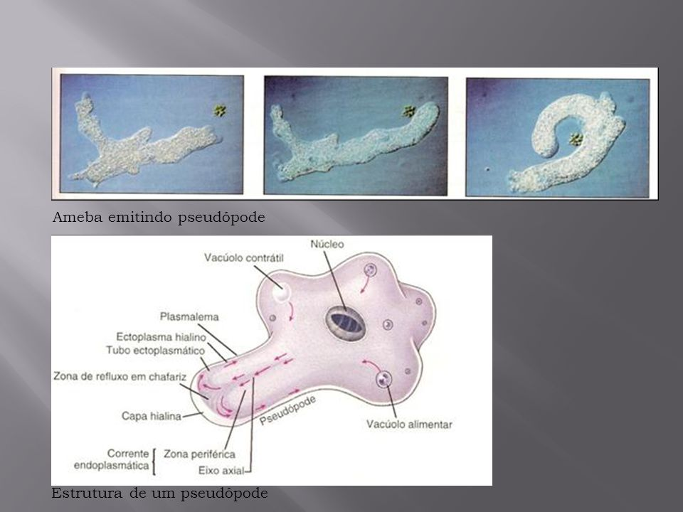 Ameba emitindo pseudópode
