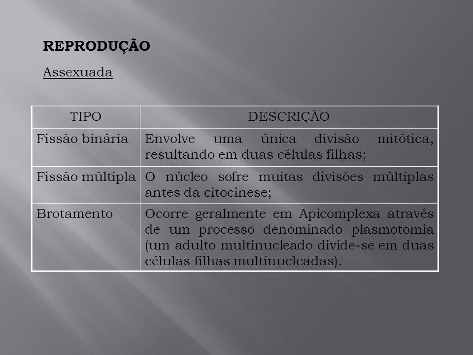 REPRODUÇÃO Assexuada TIPO DESCRIÇÃO Fissão binária