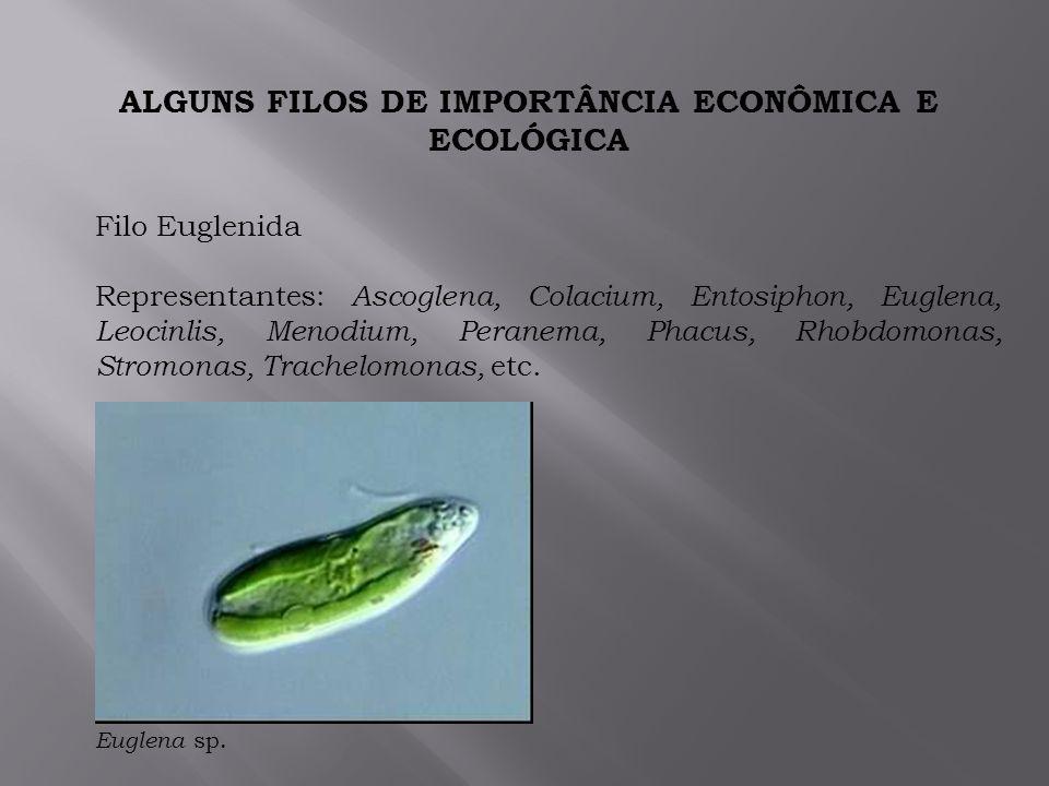 ALGUNS FILOS DE IMPORTÂNCIA ECONÔMICA E ECOLÓGICA