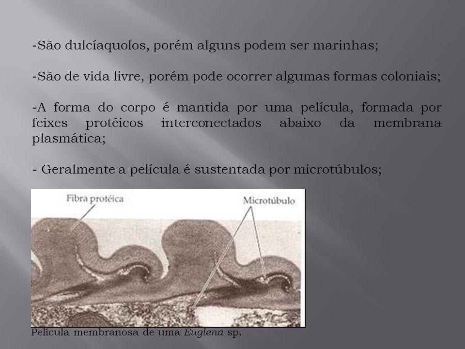 São dulcíaquolos, porém alguns podem ser marinhas;