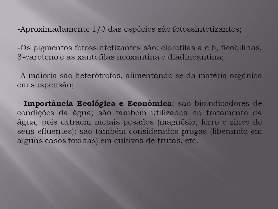 Aproximadamente 1/3 das espécies são fotossintetizantes;