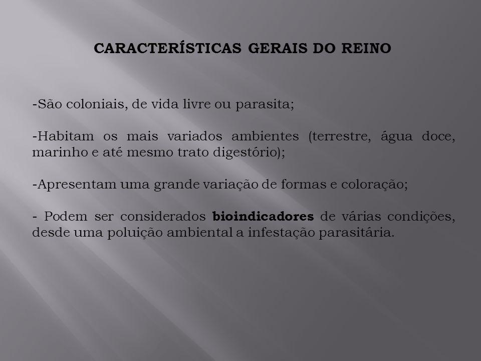 CARACTERÍSTICAS GERAIS DO REINO