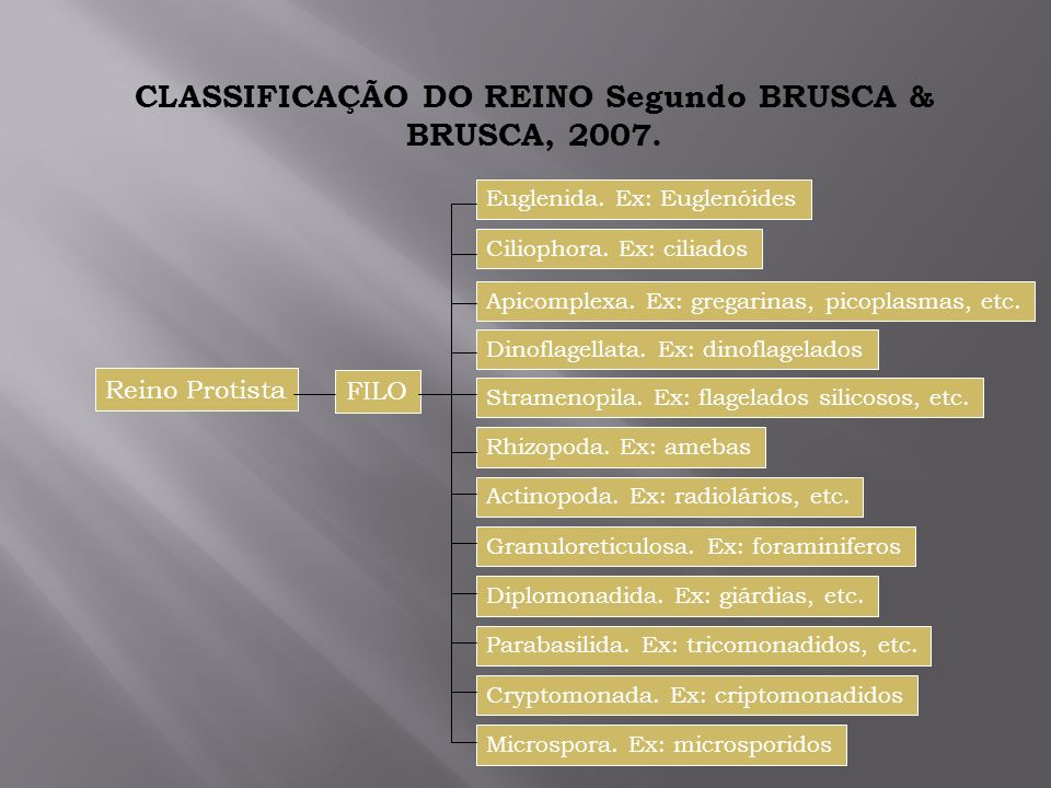 CLASSIFICAÇÃO DO REINO Segundo BRUSCA & BRUSCA, 2007.