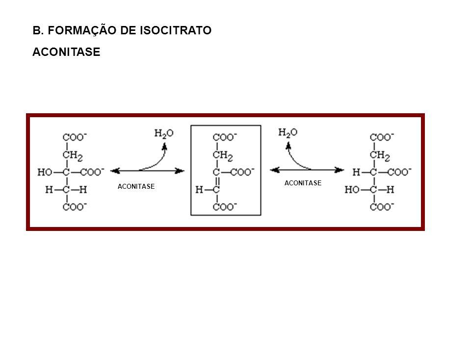 B. FORMAÇÃO DE ISOCITRATO ACONITASE
