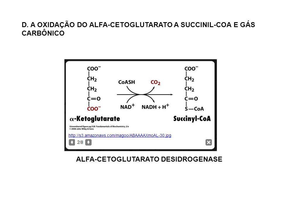 ALFA-CETOGLUTARATO DESIDROGENASE