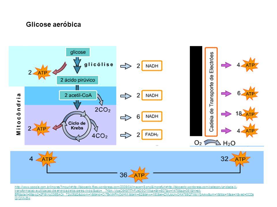Glicose aeróbica
