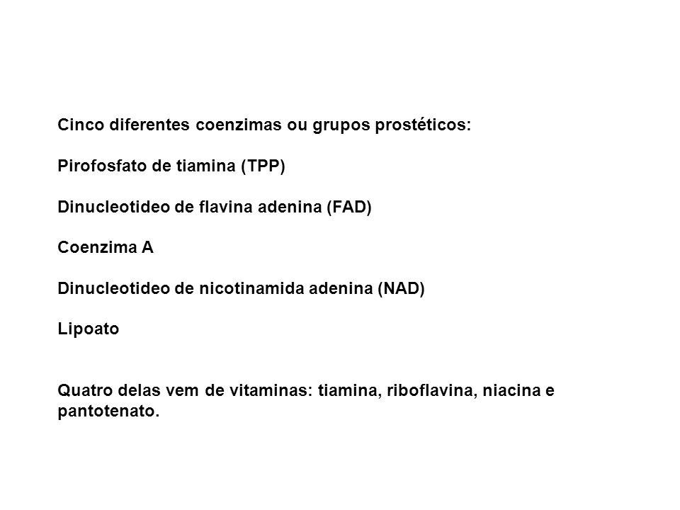 Cinco diferentes coenzimas ou grupos prostéticos: