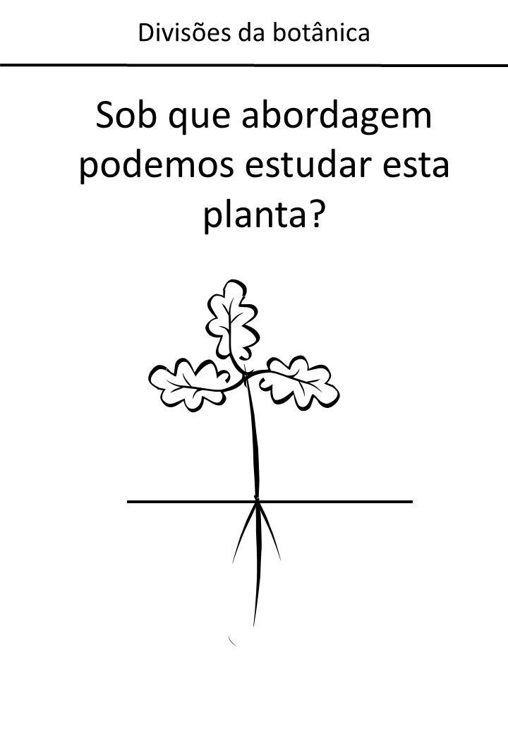 Sob que abordagem podemos estudar esta planta