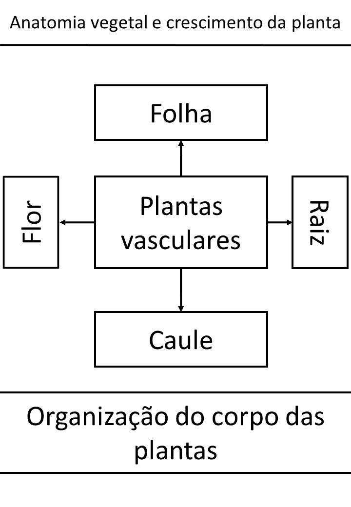 Organização do corpo das plantas
