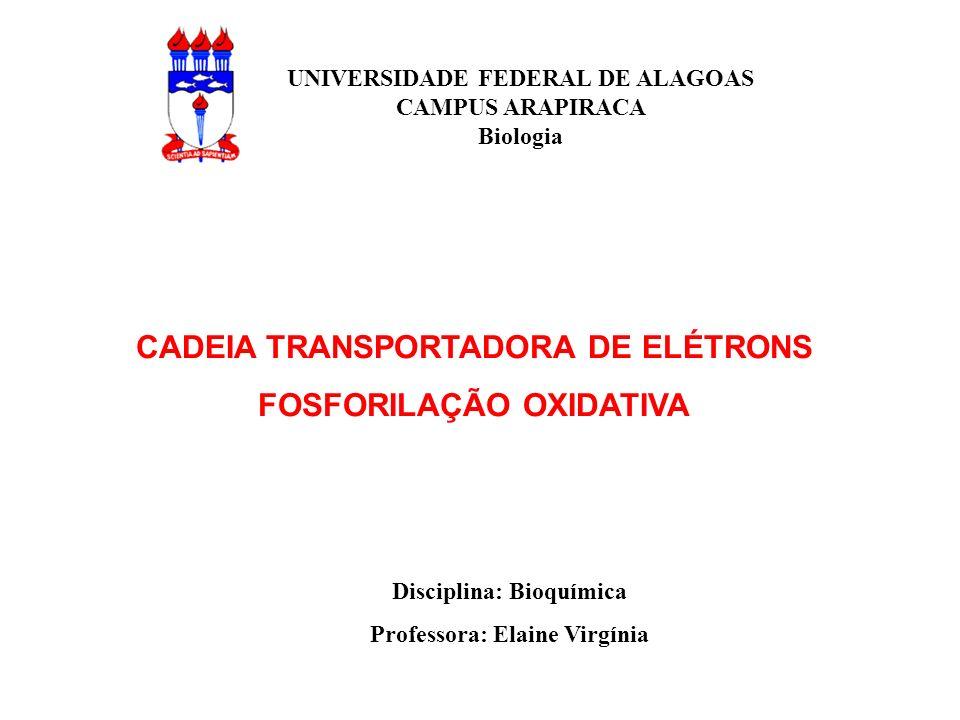 CADEIA TRANSPORTADORA DE ELÉTRONS FOSFORILAÇÃO OXIDATIVA