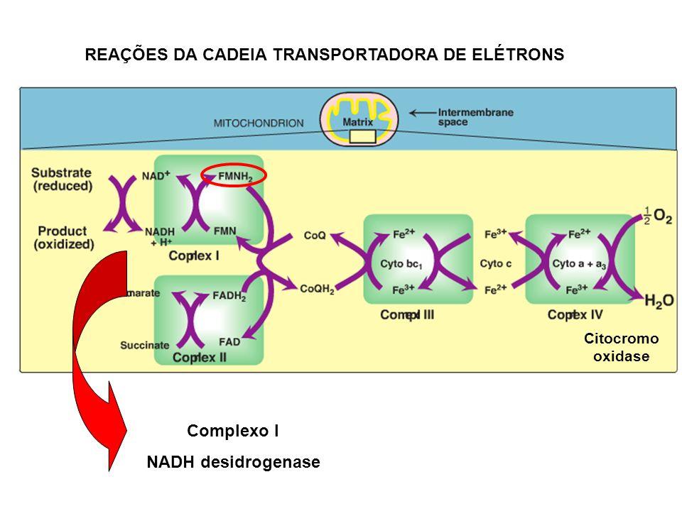 Complexo I NADH desidrogenase