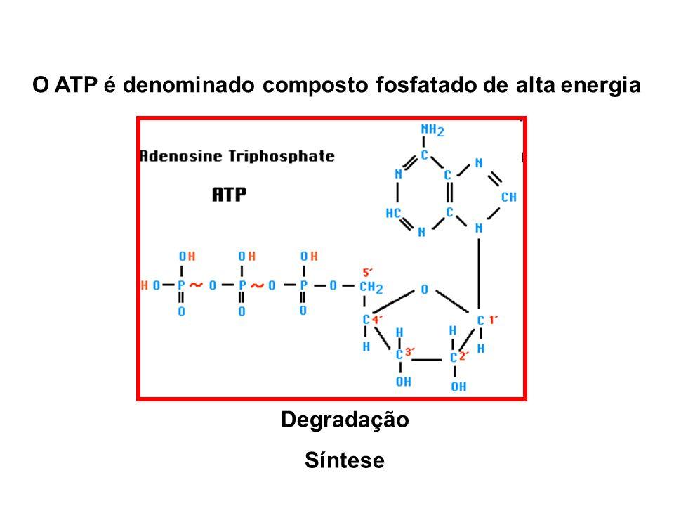 O ATP é denominado composto fosfatado de alta energia