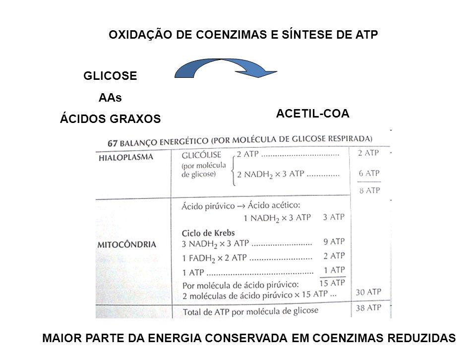 OXIDAÇÃO DE COENZIMAS E SÍNTESE DE ATP