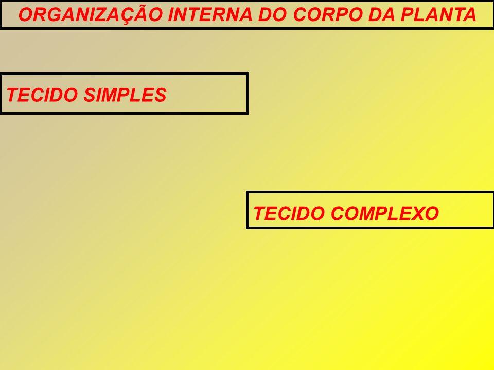 ORGANIZAÇÃO INTERNA DO CORPO DA PLANTA