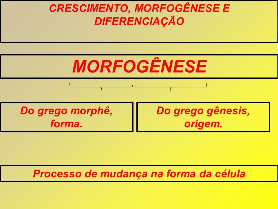 MORFOGÊNESE CRESCIMENTO, MORFOGÊNESE E DIFERENCIAÇÃO
