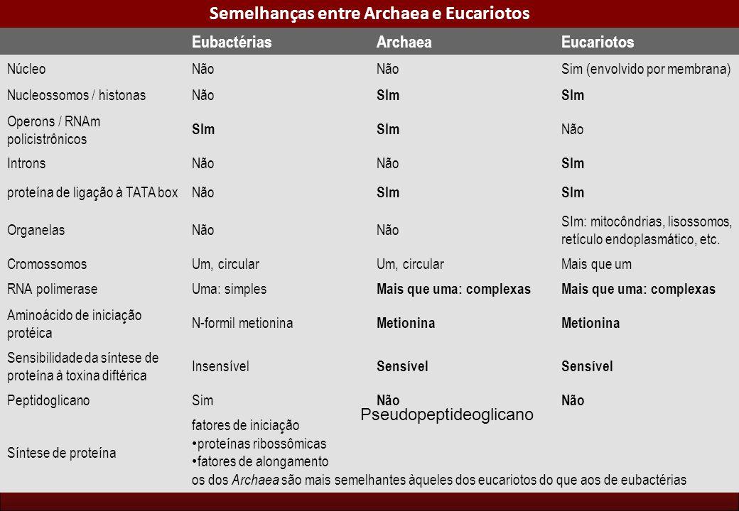 Semelhanças entre Archaea e Eucariotos