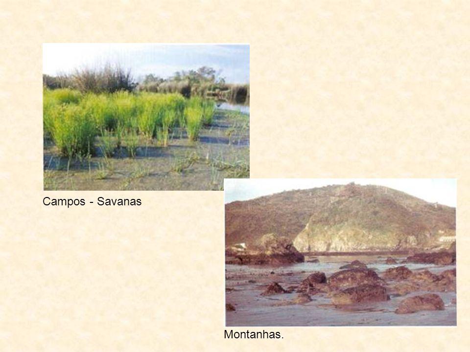 Campos - Savanas Montanhas.