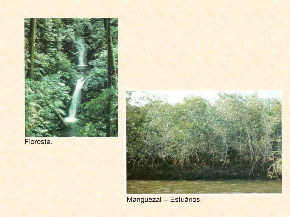 Floresta. Manguezal – Estuários.