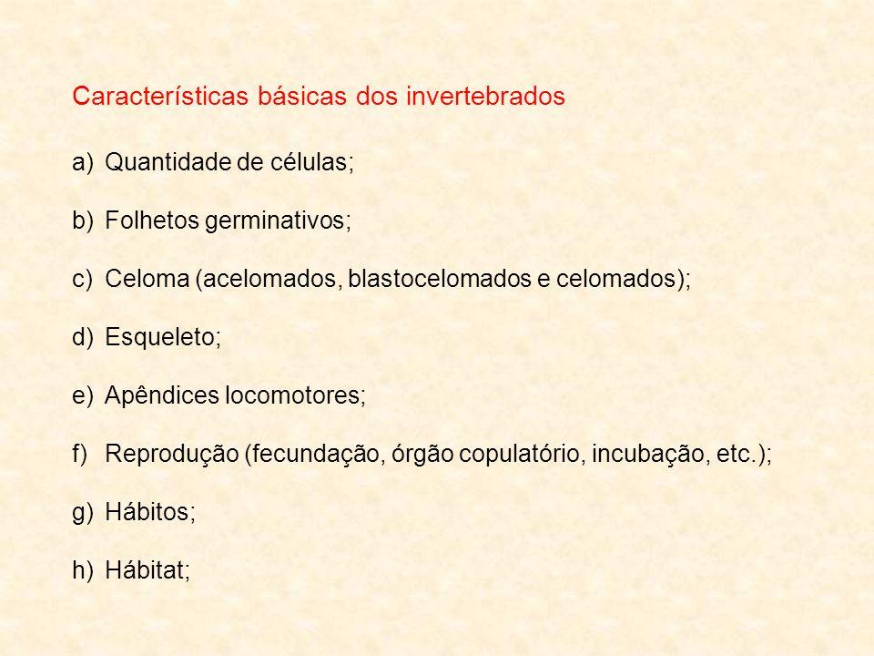 Características básicas dos invertebrados