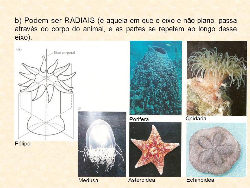 b) Podem ser RADIAIS (é aquela em que o eixo e não plano, passa através do corpo do animal, e as partes se repetem ao longo desse eixo).