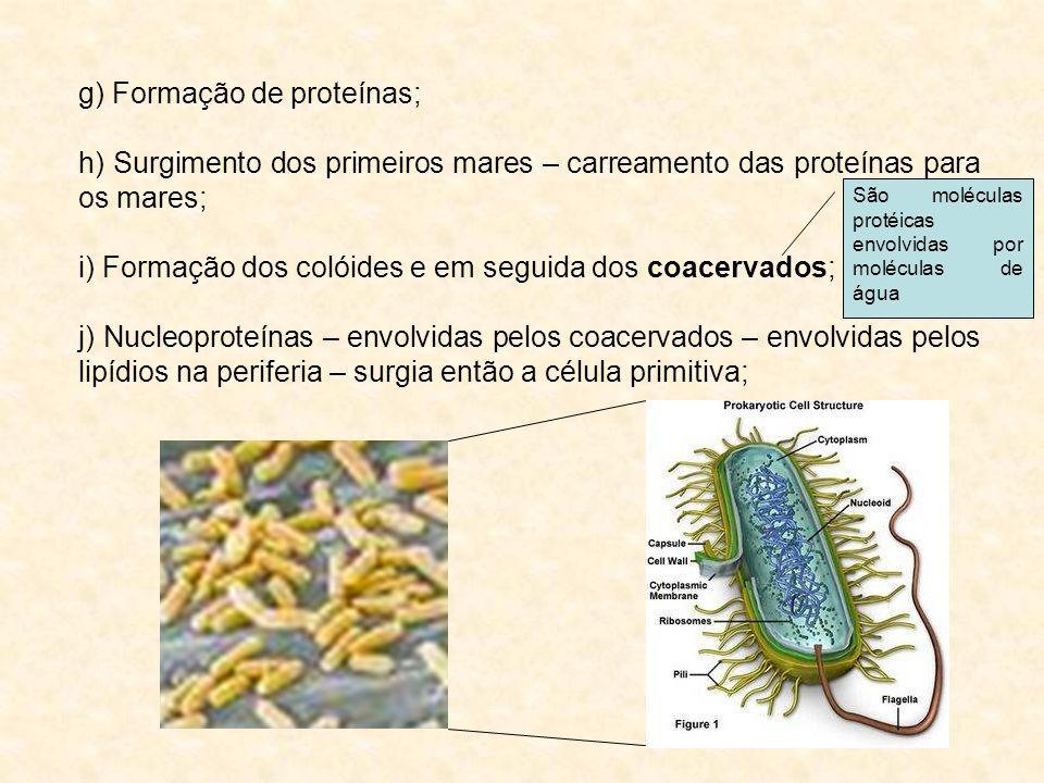g) Formação de proteínas;