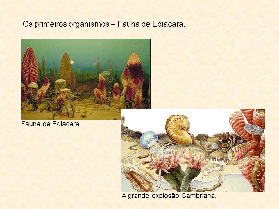 Os primeiros organismos – Fauna de Ediacara.