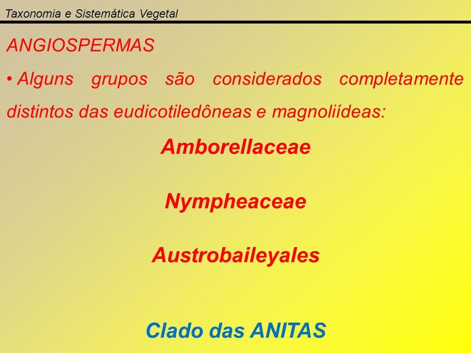 Amborellaceae Nympheaceae Austrobaileyales Clado das ANITAS