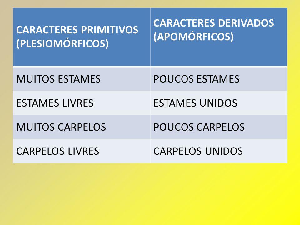 CARACTERES PRIMITIVOS (PLESIOMÓRFICOS)