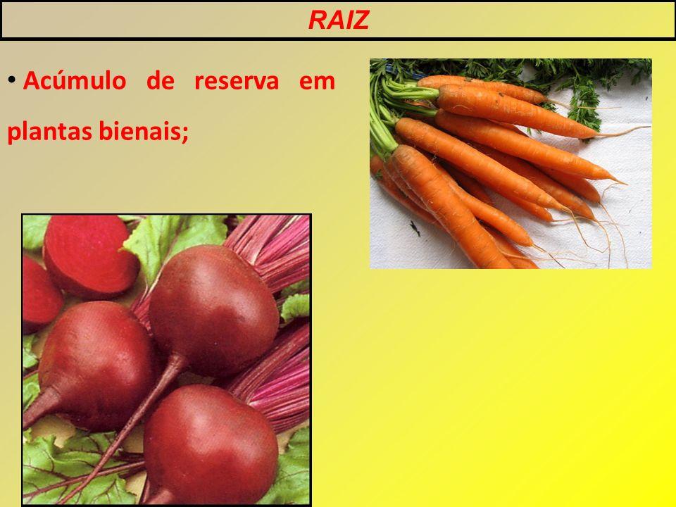 Acúmulo de reserva em plantas bienais;