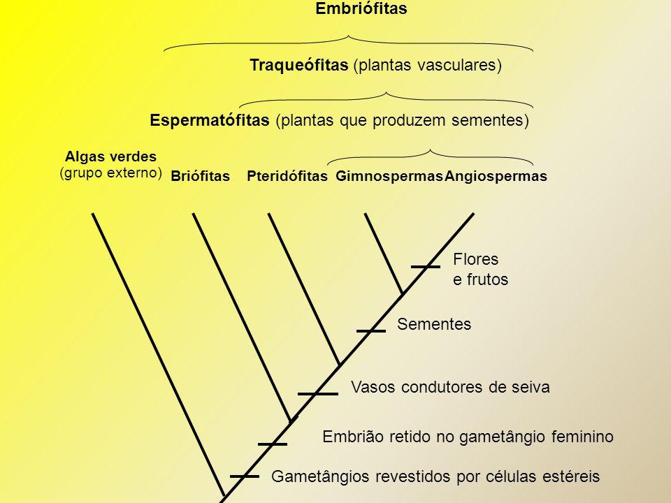 Traqueófitas (plantas vasculares)