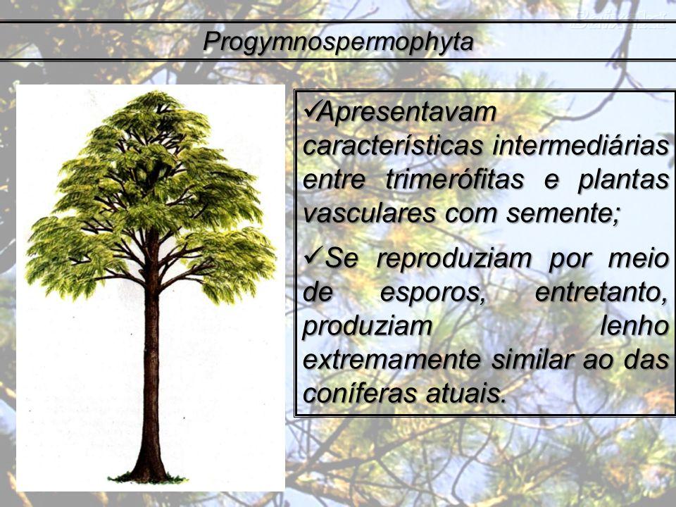 Progymnospermophyta Apresentavam características intermediárias entre trimerófitas e plantas vasculares com semente;