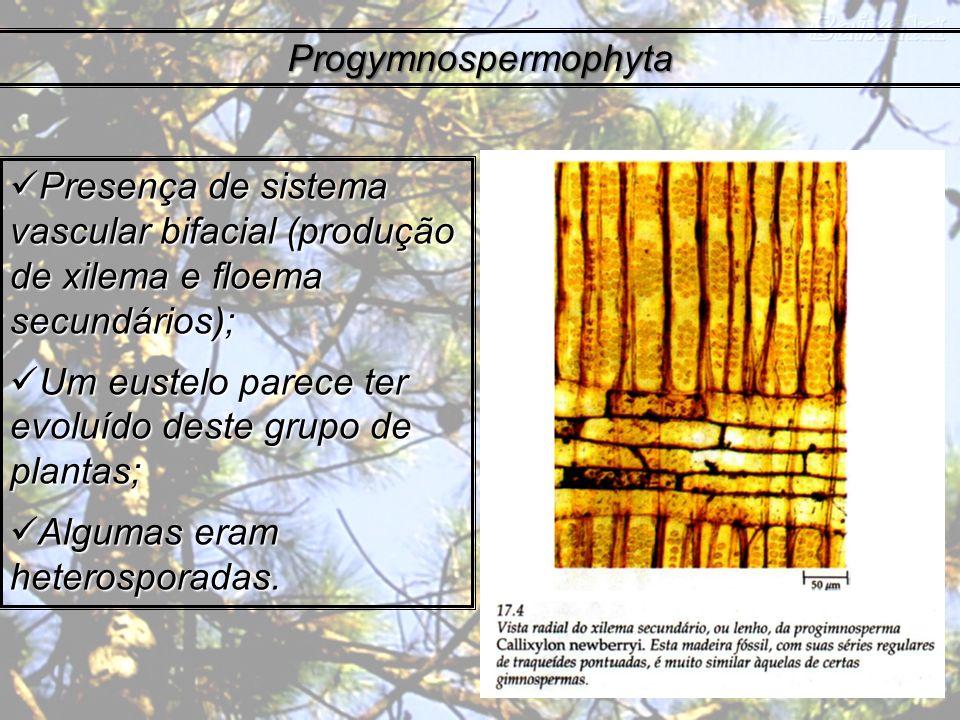 Progymnospermophyta Presença de sistema vascular bifacial (produção de xilema e floema secundários);