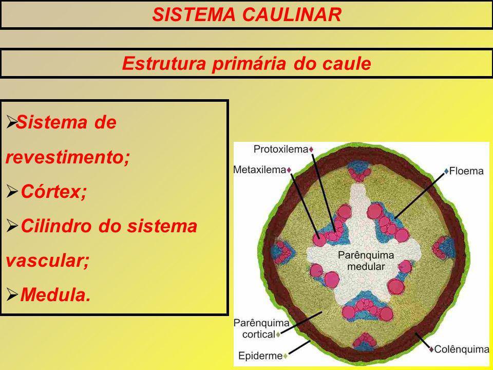 Estrutura primária do caule