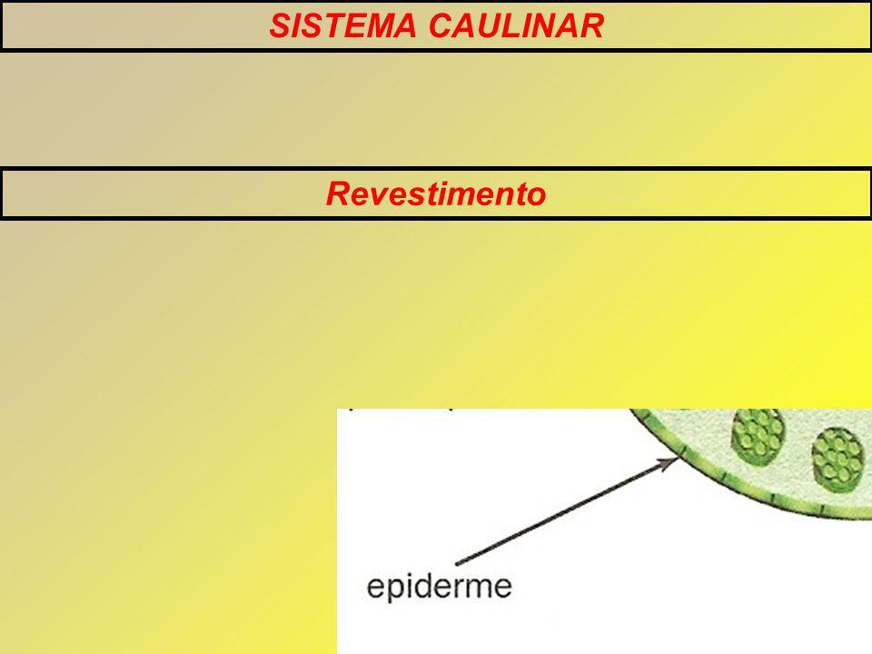 SISTEMA CAULINAR Revestimento