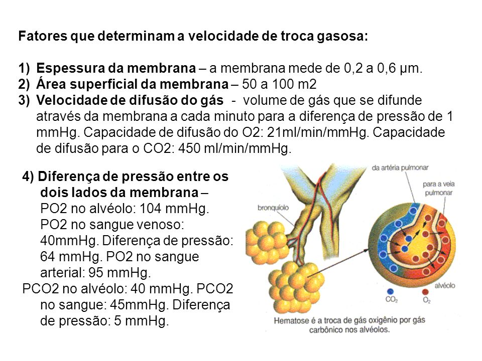 Fatores que determinam a velocidade de troca gasosa: