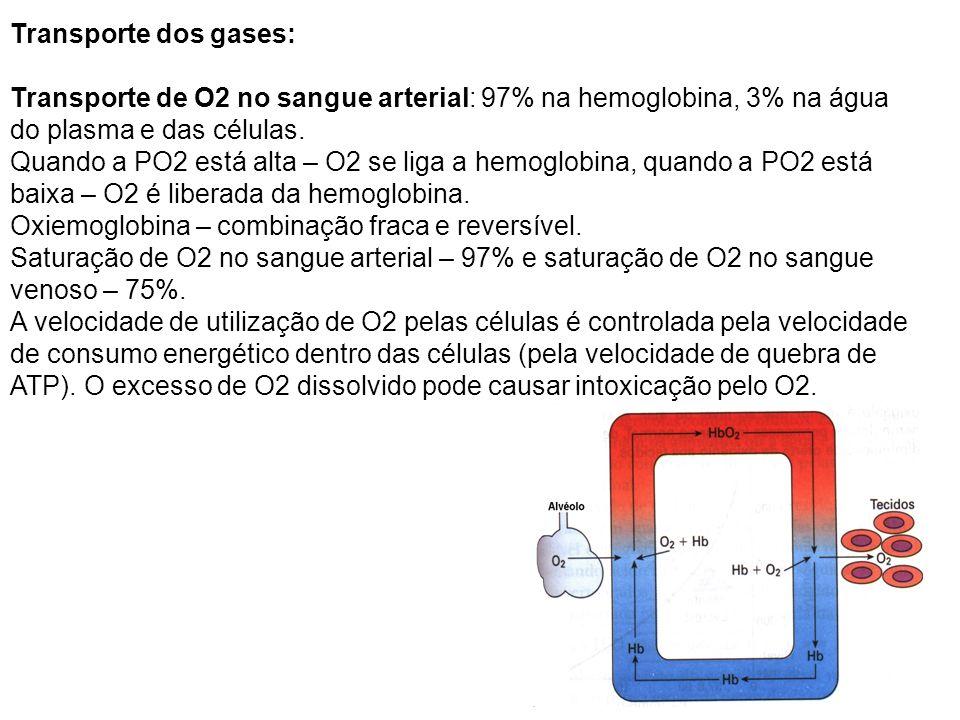 Transporte dos gases: Transporte de O2 no sangue arterial: 97% na hemoglobina, 3% na água do plasma e das células.