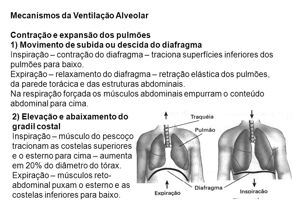 Mecanismos da Ventilação Alveolar