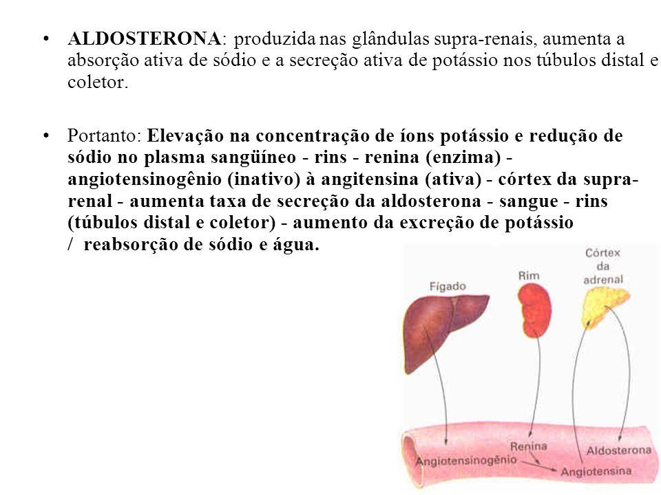 ALDOSTERONA: produzida nas glândulas supra-renais, aumenta a absorção ativa de sódio e a secreção ativa de potássio nos túbulos distal e coletor.