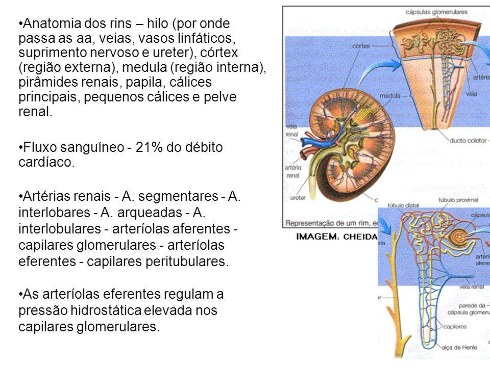 Anatomia dos rins – hilo (por onde passa as aa, veias, vasos linfáticos, suprimento nervoso e ureter), córtex (região externa), medula (região interna), pirâmides renais, papila, cálices principais, pequenos cálices e pelve renal.