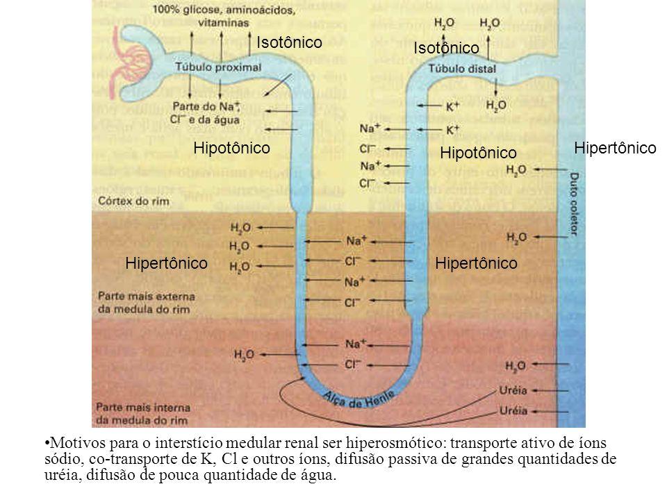 Hipotônico Isotônico. Hipertônico.