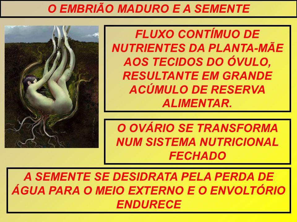 O EMBRIÃO MADURO E A SEMENTE